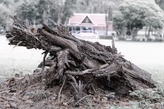 The stump was decay by termite Royalty Free Stock Photography