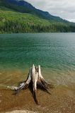 Stump in the water. Piece of driftwood in the water of Kachess Lake, Washington Royalty Free Stock Photo