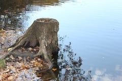 Stump. water Stock Image