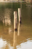 Stump  in the water Royalty Free Stock Photo