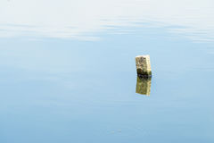 Stump in water. Royalty Free Stock Photo