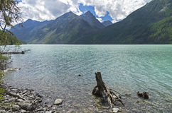 Stump in the water near the shore of the mountain lake. Altai Mo Royalty Free Stock Photo