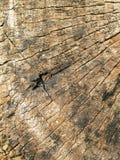 Stump weathered wood background Stock Photos