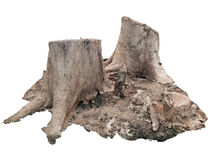 The Stump. What the thing that good represent to world destroyed Stock Photography