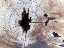 Stump. Wood root royalty free stock images