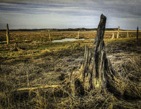 Stumped. Irving nature park Saint John New Brunswick stump, dead tree in the marsh Royalty Free Stock Photo