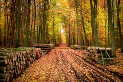 Stumped tree in an autumn forest in Poland. Europe Stock Images