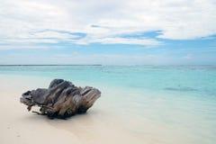 Stumpf auf dem Strand im Indischen Ozean Stockfotografie