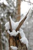 Stumpf bedeckt im Schnee Stockfotografie