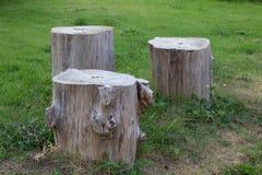 Stumpf drei auf dem grünen Gras im Garten Lizenzfreie Stockfotografie