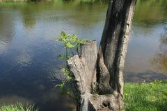 Stumpf durch den Fluss Lizenzfreies Stockbild