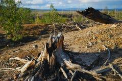 Stumpf eines Baums Lizenzfreies Stockbild