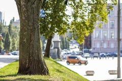 Stumpf eines Baums auf dem grünen Gras in der Stadt Stockfotos