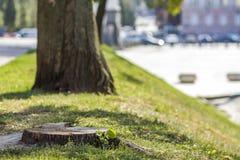 Stumpf eines Baums auf dem grünen Gras in der Stadt Stockfotografie