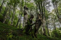 Stumpf im Wald Stockfoto