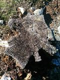 Stumpf im Wald lizenzfreies stockfoto