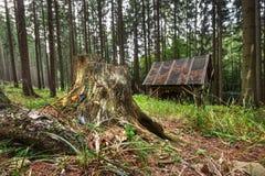 Stumpf im Wald und Fütterungsgestell Stockfoto