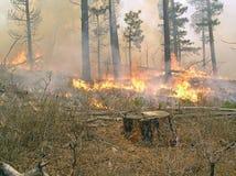 Stumpf mit Feuer stockbild