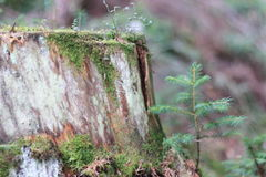 Stumpf mit Moos im Wald Stockbilder