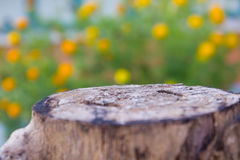 Stumpf mit natürlichem Hintergrund Lizenzfreies Stockfoto