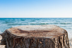 Stumpf mit Seehintergrund Lizenzfreie Stockbilder