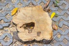 Stumpf umgeben durch Ziegelstein Lizenzfreie Stockfotos
