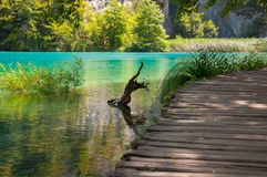 Stumpf und Weg an den Plitvice Seen Stockfotos