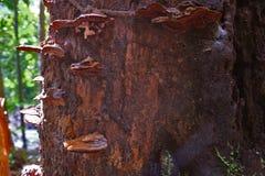 Stumpf vermehrt sich alte tropische goldene Stunde Forest Background explosionsartig stockfotografie