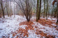 Stumpfe und deprimierende Winterwaldlandschaft Stockfotos
