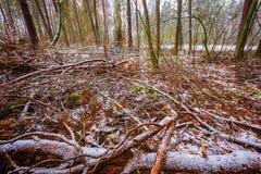 Stumpfe und deprimierende Winterwaldlandschaft Lizenzfreies Stockfoto