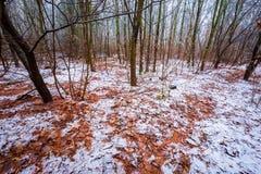 Stumpfe und deprimierende Winterwaldlandschaft Lizenzfreies Stockbild