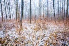 Stumpfe und deprimierende Winterwaldlandschaft Stockfoto