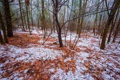 Stumpfe und deprimierende Winterwaldlandschaft Lizenzfreie Stockfotografie