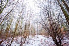 Stumpfe und deprimierende Winterwaldlandschaft Stockfotografie