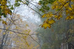 Stumpfe und schöne Herbstlandschaft Stockbilder