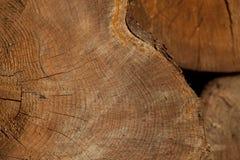 Stumpfhintergrund in der Natur Stockbilder