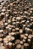 Stumps. Stock Photos