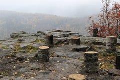 stumps Fotografia de Stock