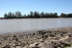 Stumps in Fraser River Royalty Free Stock Image
