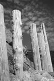 Stumps in Monochrome Royalty Free Stock Photos