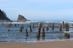 Stumps of Mystery on Oregon Coast Royalty Free Stock Photos