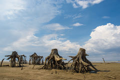 The stumps of old trees on the sand Royalty Free Stock Photo