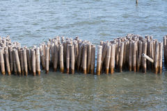 Stumps in the sea Royalty Free Stock Photography