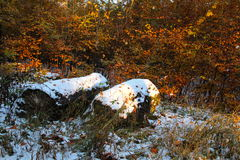 Stumps with snow Royalty Free Stock Photography