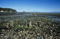 Stumps on stone beach Stock Photos