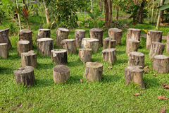 Stumps Of Tree Trunks Stock Image