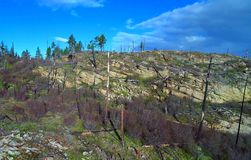 Stumps on the valley caused by deforestation and slash and burn type of agriculture royalty free stock image