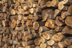 Stumps of wood stacked Royalty Free Stock Photo
