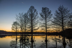 Stumpy Lake Bald Cypress Silhouette. Bald Cypress trees in silhouette at Stumpy Lake, Virginia Beach, Virginia Stock Image