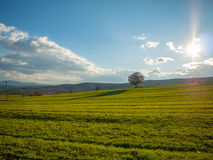 Stuning landscape of a field with grass Stock Image